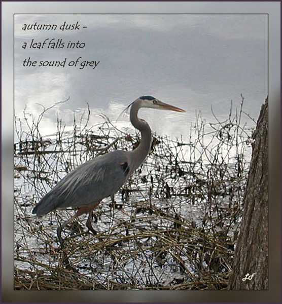 'autumn dusk� / a leaf falls into / the sound of gray' by Lary Fraser. Haiku first published in Mainichi Daily News Oct. 2007.