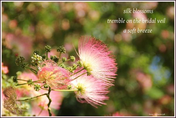 'silk blossoms / tremble on the bridal veil / a soft breeze' by Irena Szewczyk
