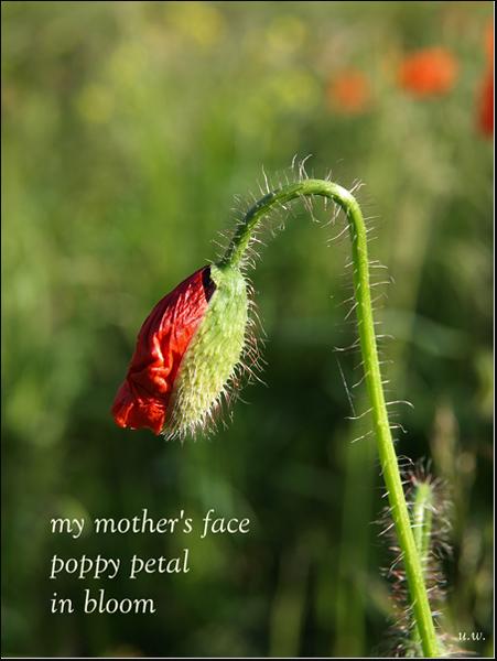 'my mother's face' by Urszula Wielanowska. Haiku first published in Haiku Novine 2011.