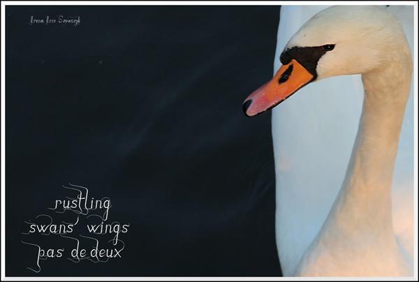'rustling / swan's wings / pas de deux' by Irena Szewczyk.
