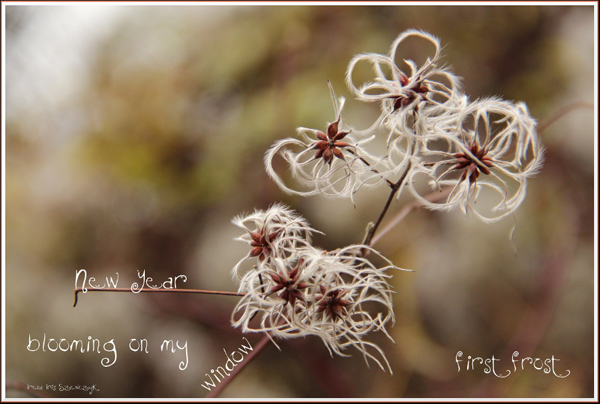 'new year / blooming on my window / first frost' by Irena Szewczyk