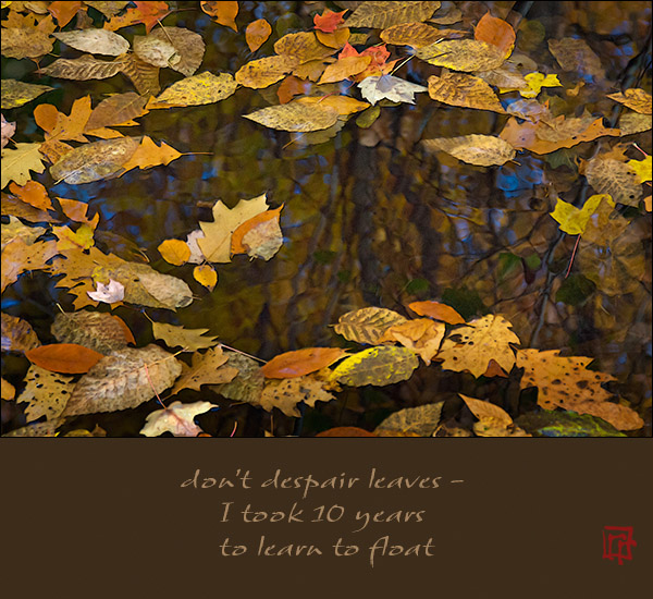 'don't despair leaves� / I took 10 years / to learn to float' by Ray Rasmussen