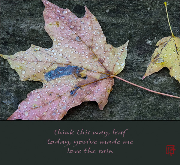 'think this way leaf / today, you've made me / love the rain' by Ray Rasmussen