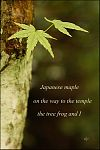 'Japanese maple / on the way to the temple / the tree frog and I' by Dorota Pyra.