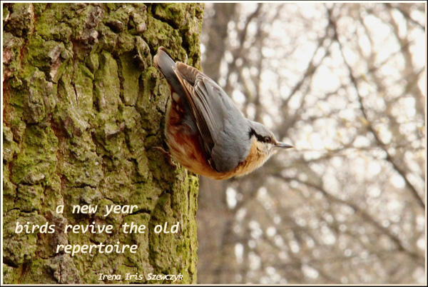 'a new year / birds revive the old / repertoire' by Irena Szewczyk