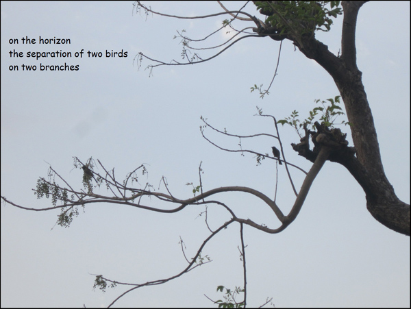 'on the horizon / the separation of two birds / on two branches' by Neelam Dadhwal