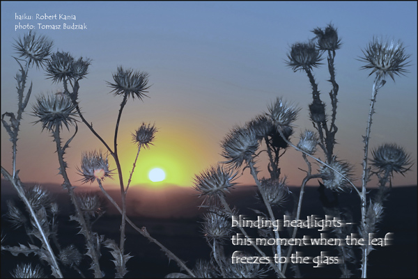 'blinding headlights� / this moment when the leaf / freezes to the glass' by Robert Kania. Art by Tomasz Budziak