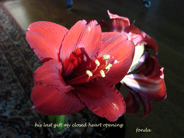 'his last gift my closed heart opening' by Fonda Bell Miller