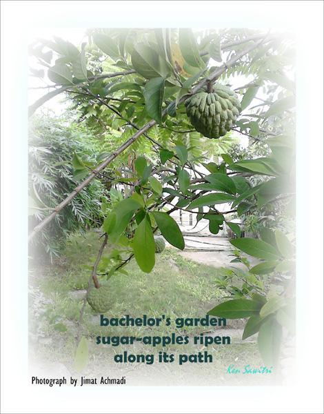 'bachelor's garden / sugar-apples ripen / along its path' by Ken Sawitri. Art by Jimat Achmadi