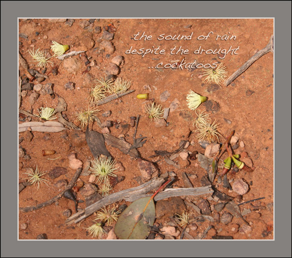 'the sound of rain / despite the drought / ...cockatoos' by Linda Pilarski