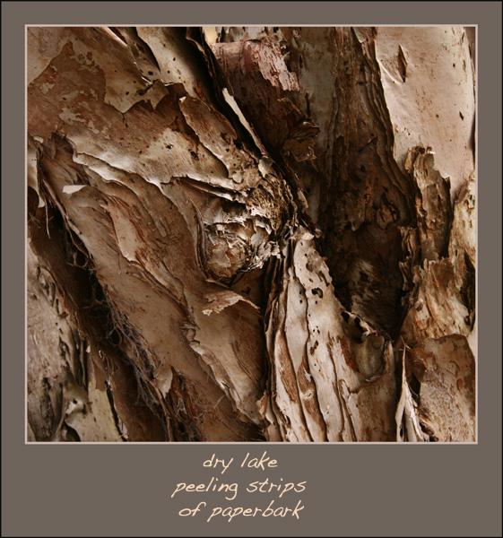 'dry lake / peeling strips / of paperbark' by Linda Pilarski