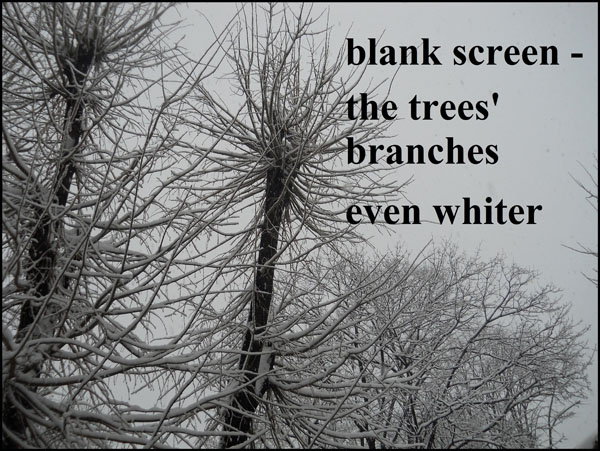 'blank screen / the trees' branches / even whiter' by Ana Drobot