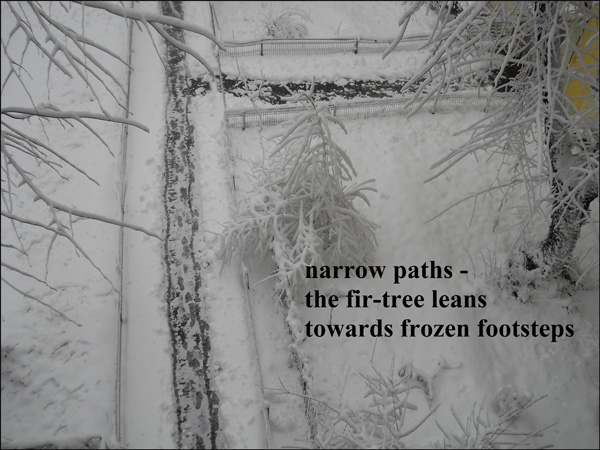 'narrow paths� / the fir tree leans / towards frozen footsteps' by Ana Drobot