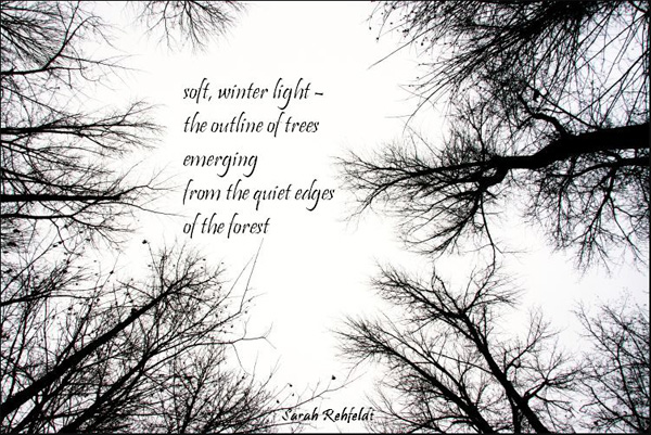 'soft, winter light� / the outline of trees / emerging / from the quiet edges / of the forest' by Sarah Rehfeldt