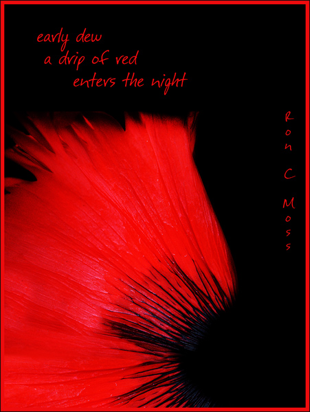 'early dew / a drip of red / enters the night' by Ron Moss