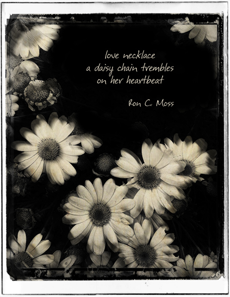 "'love necklace / a daisy chain trembles / on her heartbeat"" by Ron Moss"