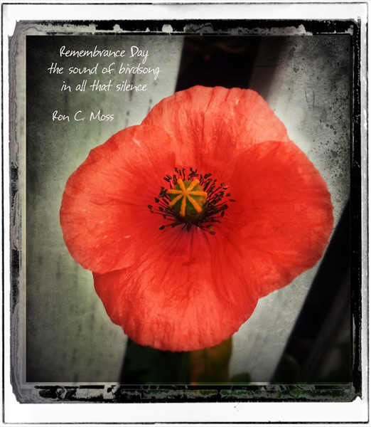"""Remembrance Day / the sound of birdsong / in all that silence' by Ron Moss"