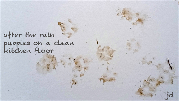 'after the rain / puppies on a clean / kitchen floor ' by Jerry Dreesen