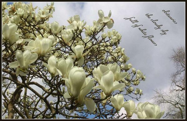 'obituaries / the cloudy sky / full of white flowers' by Janina Kolodziejczyk.