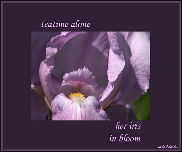 'teatime alone / her iris / in bloom' by Linda Pilarski