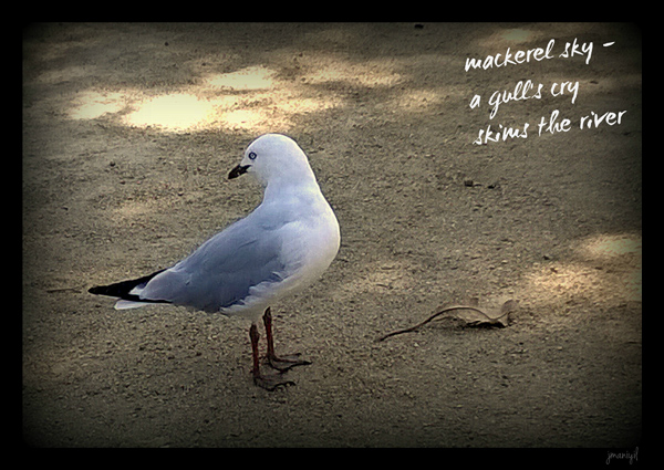 'mackerel sky� / a gull's cry / skims the river' by Jayashree Maniyil