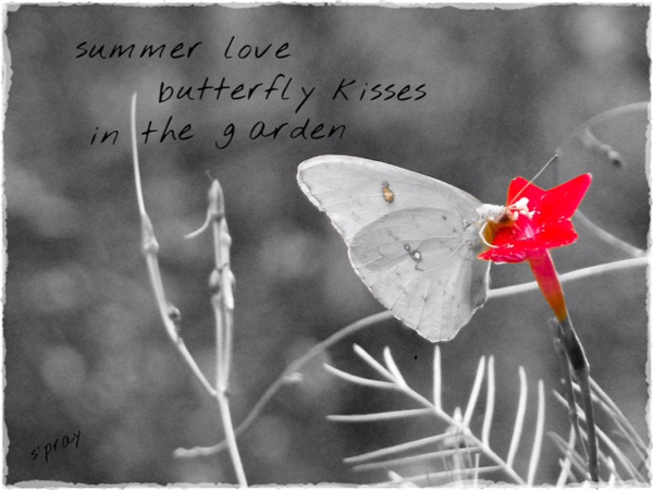' summer love / butterfly kisses / in the garden' by Sandi Pray