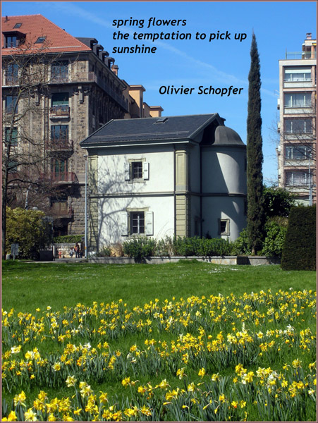'spring flowers / the temptation to pick up / sunshine' by Olivier Schopfer