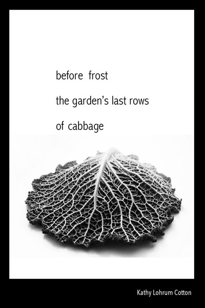 'before frost / the garden's last rows / of cabbage' by Kathy Lohrum Cotton