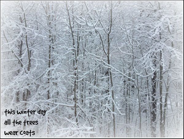 """""""this winter day / all the trees / wear coats' by Rick Hurst"""