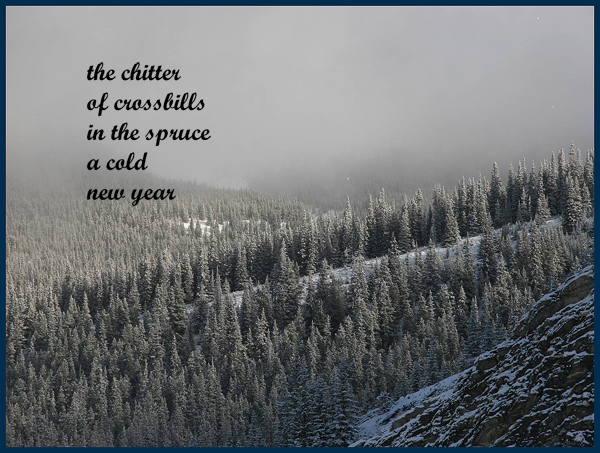 'the chitter / of crossbills / in the spruce / a cold / new year' by Linda Pilarski