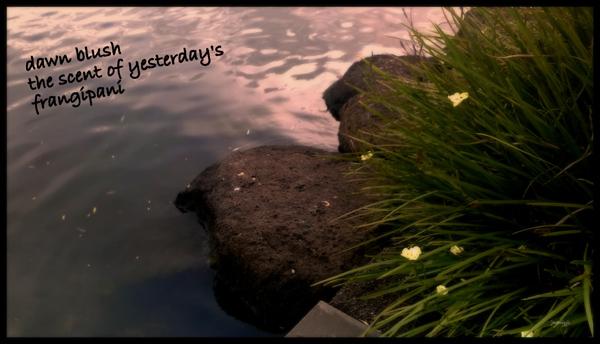 'dawn blush / the scent of yesterday's  / frangipani' by Jayashree Maniyil