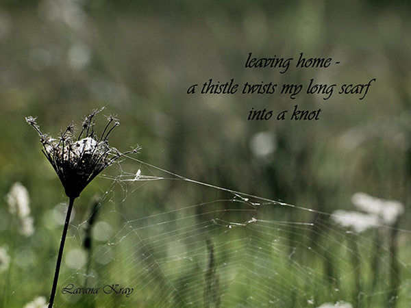 'leaving home– / a thistle twists my long scarf / into a knot' by Lavana Kray