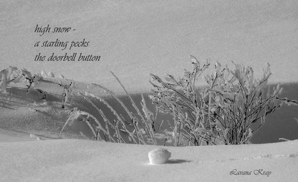 'high snow� / a starling pecks / the doorbell button' by Lavana Kray