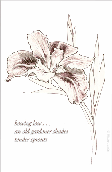 'bowing low... / an old gardener shades / tender sprouts' by Elaine Andre