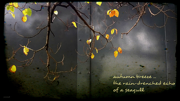 'autumn breeze... / the rain-drenched echo / of a seagull' by Jayashree Maniyil