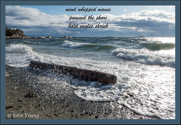'wind whipped waves / pummel the shore / bald eages shriek' by john Young