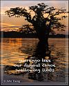 'guarango tree / our dugout canoe / swallowing limbs' by John Young