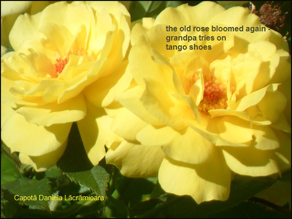 'the old rose bloomed again� / grandpa tries on / tango shoes' by Daniela Capota
