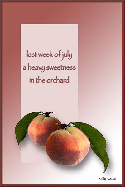 'last week of july /  a heavy sweetness / in the orchard' by Kathy Cotton