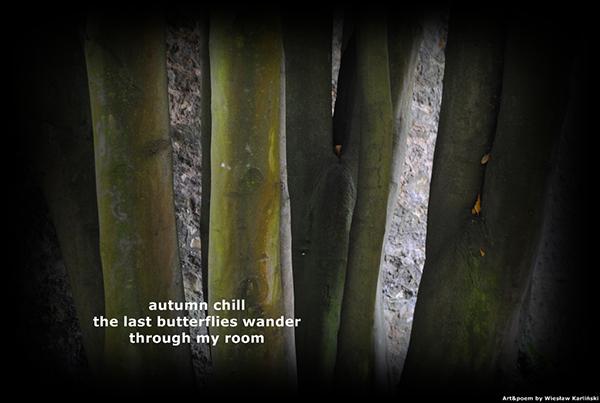 'autumn chill / the last butterflies wander / through my room' by Wieslaw Karlinski
