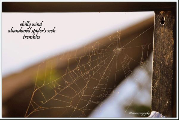 'chilly wind / abandoned spider's web / trembles' by Mariusz Ogryzko