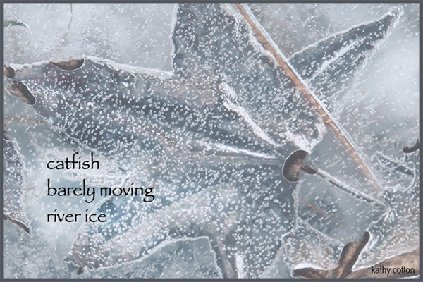 'catfish / barely moving / winter ice' by Kathy Cotton