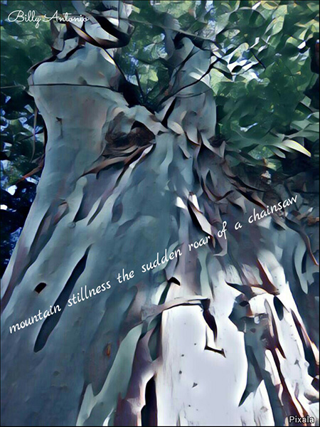 'mountain stillness the sudden roar of a chainsaw' by Billy Antonio