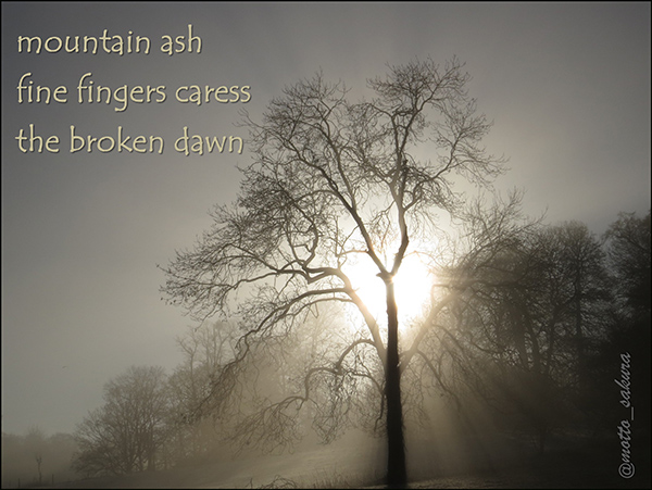 'mountain ash / fine fingers caress / the broken dawn' by David Kelly