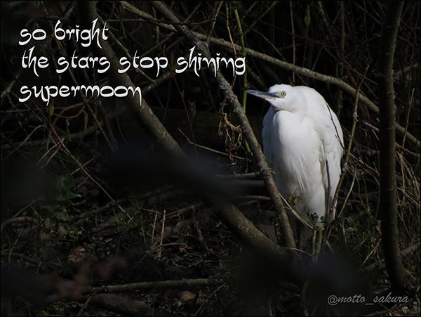 'so bright / the stars stop shining / supermoon' by David Kelly