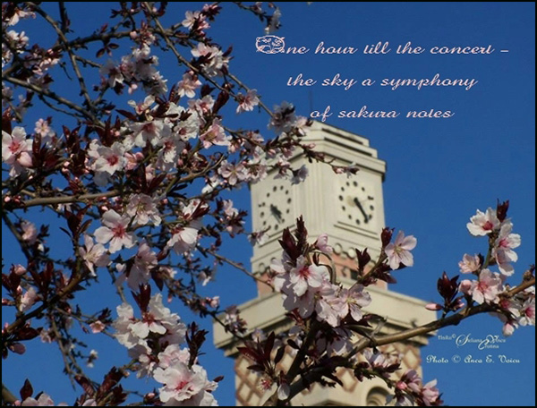'one hour till the concert— / the sky a sysmphony / of sakura notes' by Steliana Voicu. Art by Anca Voicu. Haiku first published by Chrysanthemum 19, April 2016.