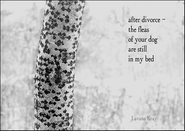 """""""after divorce� /  the fleas /  of your dog / are still  / in my bed"""" by Lavana Kray"""