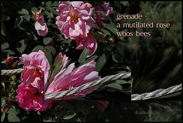 """""""grenade— / a mutilated rose / woos bees' by Lavana Kray"""