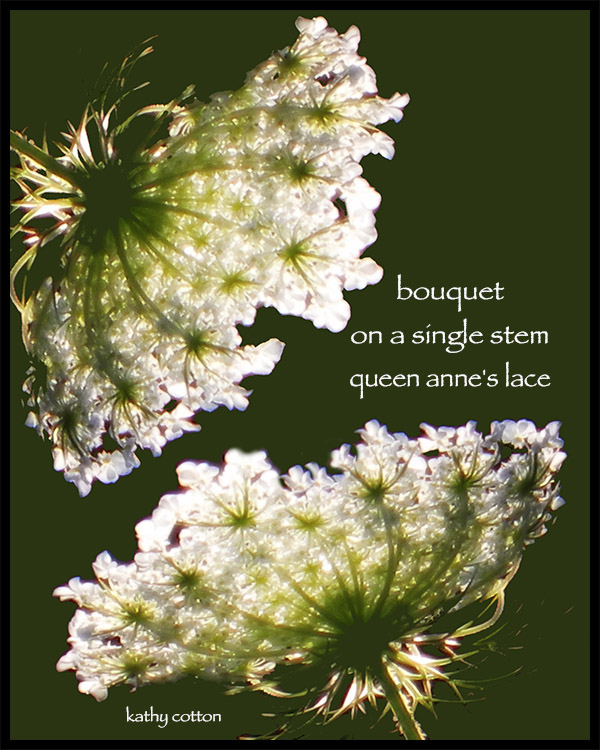 'bouquet / on a single stem / queen anne's lace' by Kathy Cotton