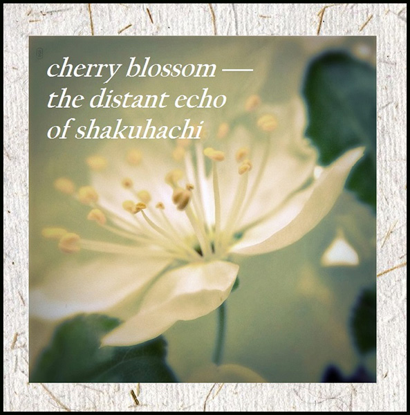 'cherry blossom— / the distant echo / of shakuachi' by Andy McLellan. Art by Cristina Omchi-Smith.